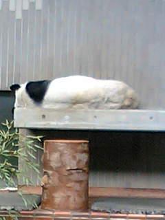 .[panda1].jpg